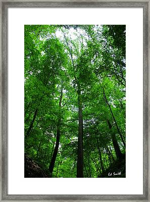 Shelter Me Framed Print by Ed Smith