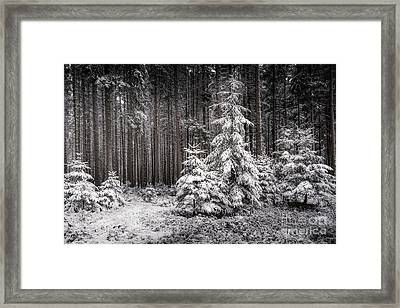 Framed Print featuring the photograph Sheltered Childhood by Hannes Cmarits