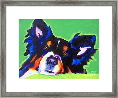 Sheltie - Socks Framed Print