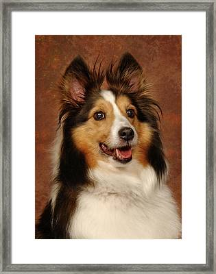 Framed Print featuring the photograph Sheltie by Greg Mimbs