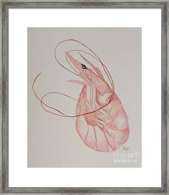 Shem Shrimp Framed Print