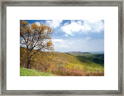 Framed Print featuring the photograph Shenandoah by Nigel Fletcher-Jones