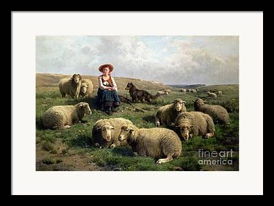 Sheep Dog Framed Prints