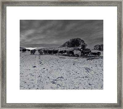 Framed Print featuring the photograph Shepherds Work by Keith Elliott