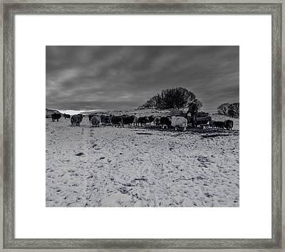 Shepherds Work Framed Print