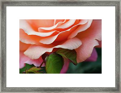 Sherbet Framed Print
