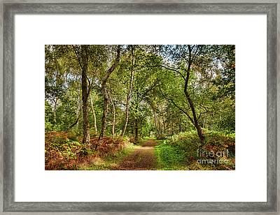 Sherwood Forest, England Framed Print by Colin and Linda McKie