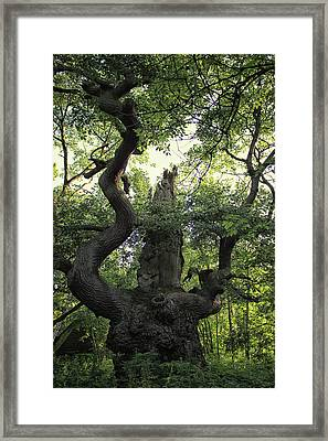 Sherwood Forest Framed Print by Martin Newman
