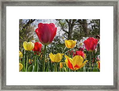 Framed Print featuring the photograph Sherwood Gardens 17 by Chris Scroggins