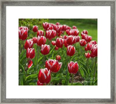 Framed Print featuring the photograph Sherwood Gardens 19 by Chris Scroggins
