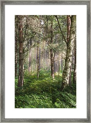Sherwood Pines Forest Framed Print