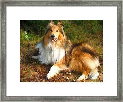 Shetland Dog Framed Print by Garland Johnson