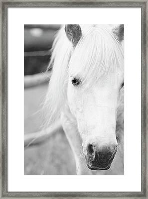 Shetland Pony Framed Print by Tina Lee