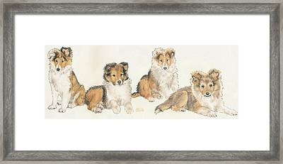 Shetland Sheepdog Framed Print by Barbara Keith
