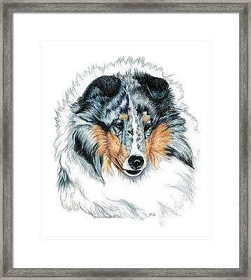 Shetland Sheepdog, Sheltie, Blue Merle Framed Print by Kathleen Sepulveda