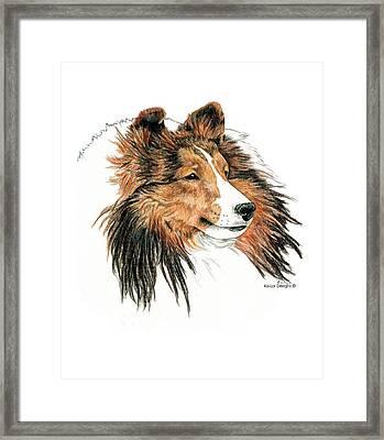Shetland Sheepdog, Sheltie Sable Framed Print by Kathleen Sepulveda