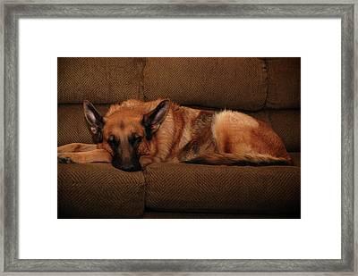 Shhh. Dog Sleeping Here - German Shepherd Dog Framed Print by Angie Tirado