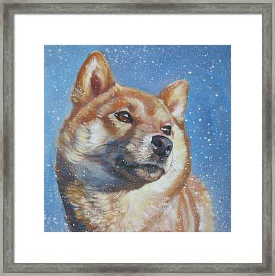 Shiba Inu In Snow Framed Print by Lee Ann Shepard