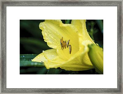 Shielded From The Rain Framed Print