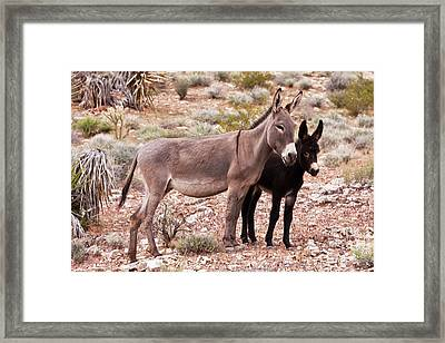 Shielding Mother Framed Print