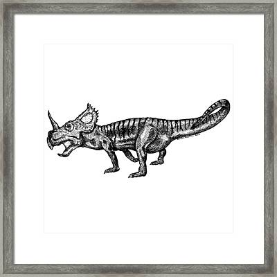Shielizard Framed Print by Karl Addison