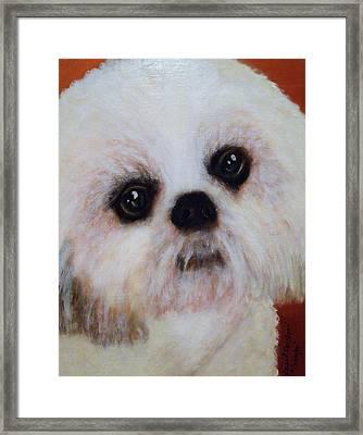 Shih-tzu - Caddy Mo Framed Print