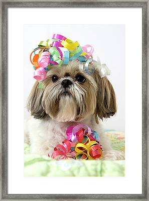 Shih Tzu Dog Framed Print by Geri Lavrov