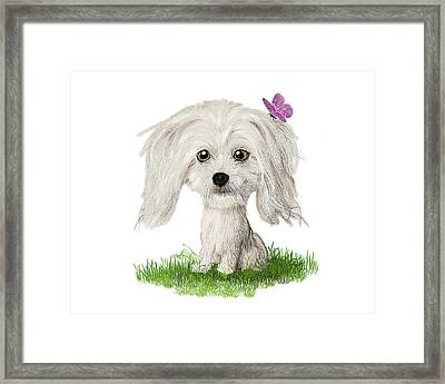 Shih Tzu Puppy With Butterfly Framed Print