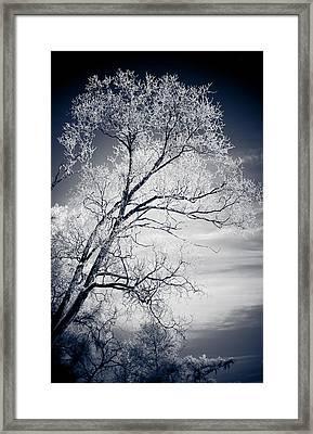 Shimmer Framed Print by Maggie Terlecki