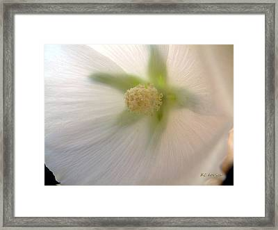 Framed Print featuring the photograph Shimmer by RC DeWinter