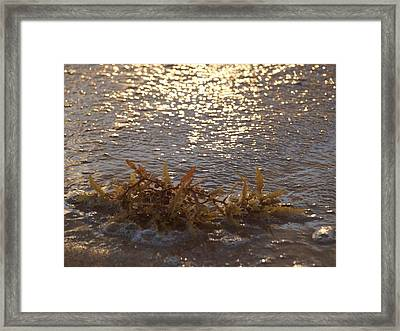 Shimmering Waters  Framed Print