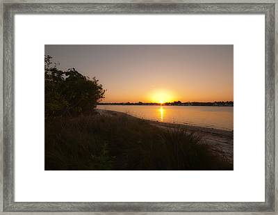 Shimmers Of Gold Framed Print by Laura DAddona