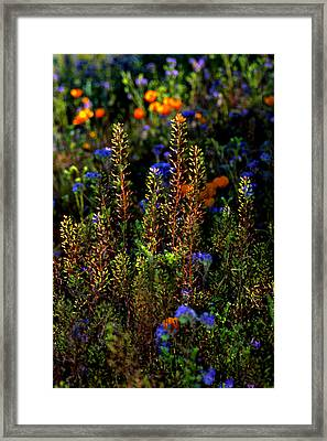 Shimmers Framed Print