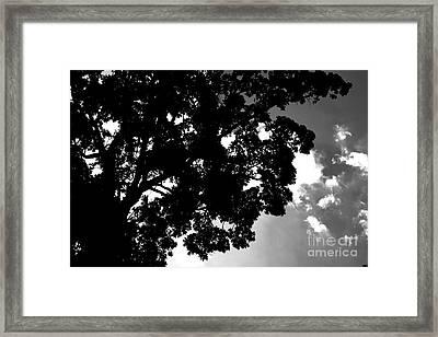 Shine Framed Print by Benjamin Johnson