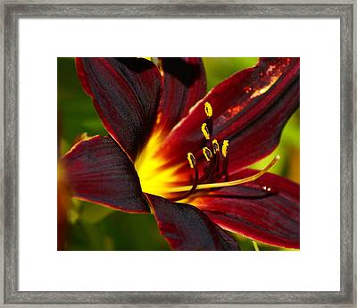 Framed Print featuring the photograph Shine From Within by Ben Upham III