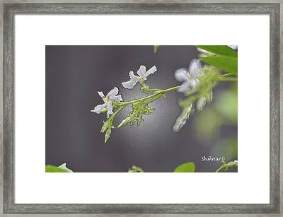 Shine In The Dark Framed Print