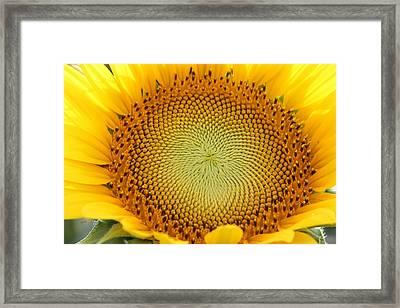 Shine On Framed Print by Dawn Davis