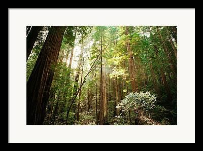Forrest Photographs Framed Prints