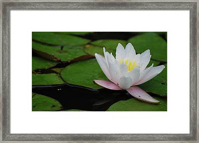 Framed Print featuring the photograph Shining Bright by Amee Cave