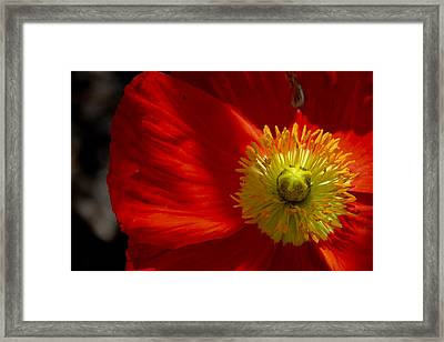 Shining Down, Burning Bright Framed Print by Christopher Phelps