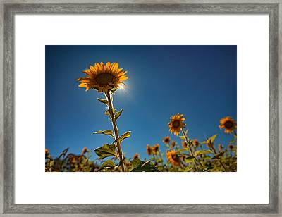 Shining High Framed Print by Rick Berk