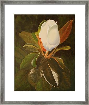 Shining Magnolia Framed Print