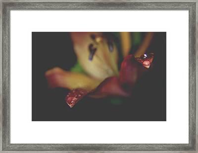 Shining Souls In The Night Framed Print