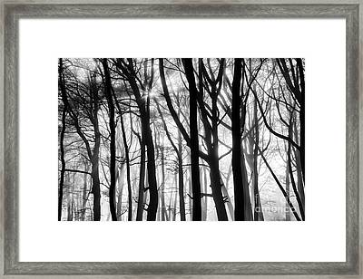 Shining Through  Framed Print by Tim Gainey