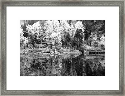 Shining Trees Framed Print