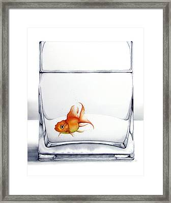 Shiny Framed Print by Christina Meeusen