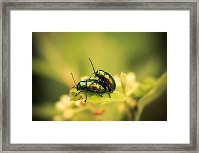 Shiny Pair Framed Print by Shane Holsclaw