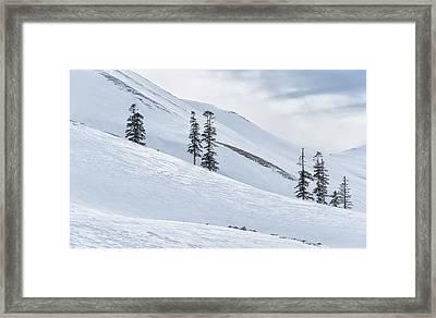 Shiny Snow Framed Print by Svetlana Sewell