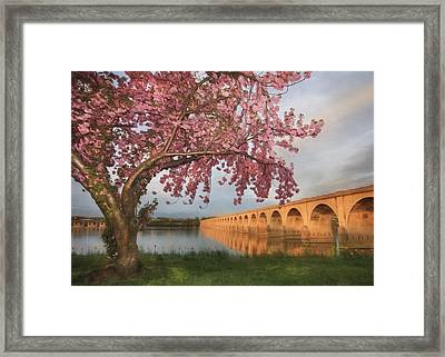 Shipoke In Spring Framed Print by Lori Deiter