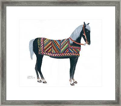 Shirvan Pony Framed Print